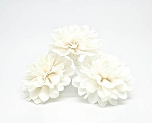 Sola plant flower